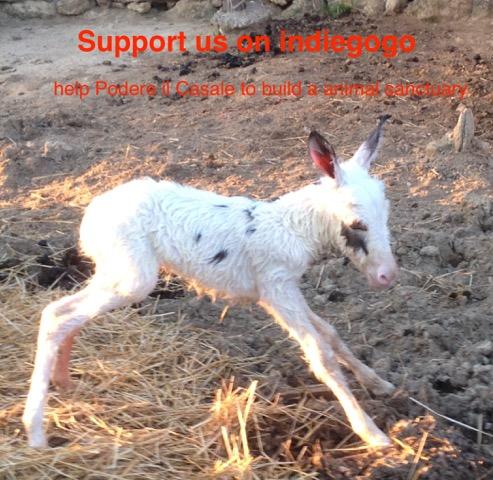 Crowdfunding Animals Tuscany