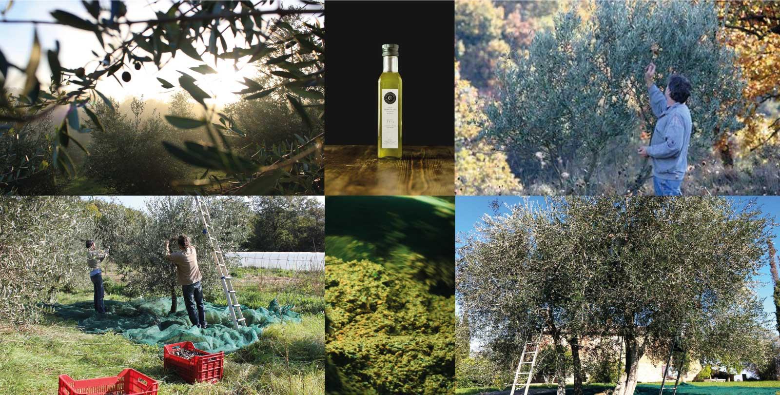 come scegliere olio d'oliva