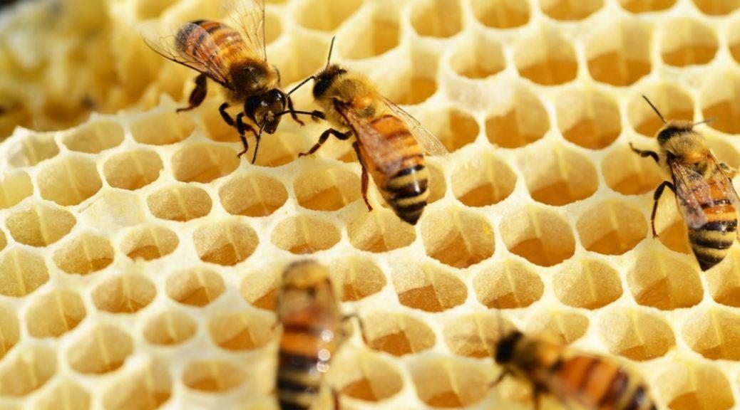 miele api