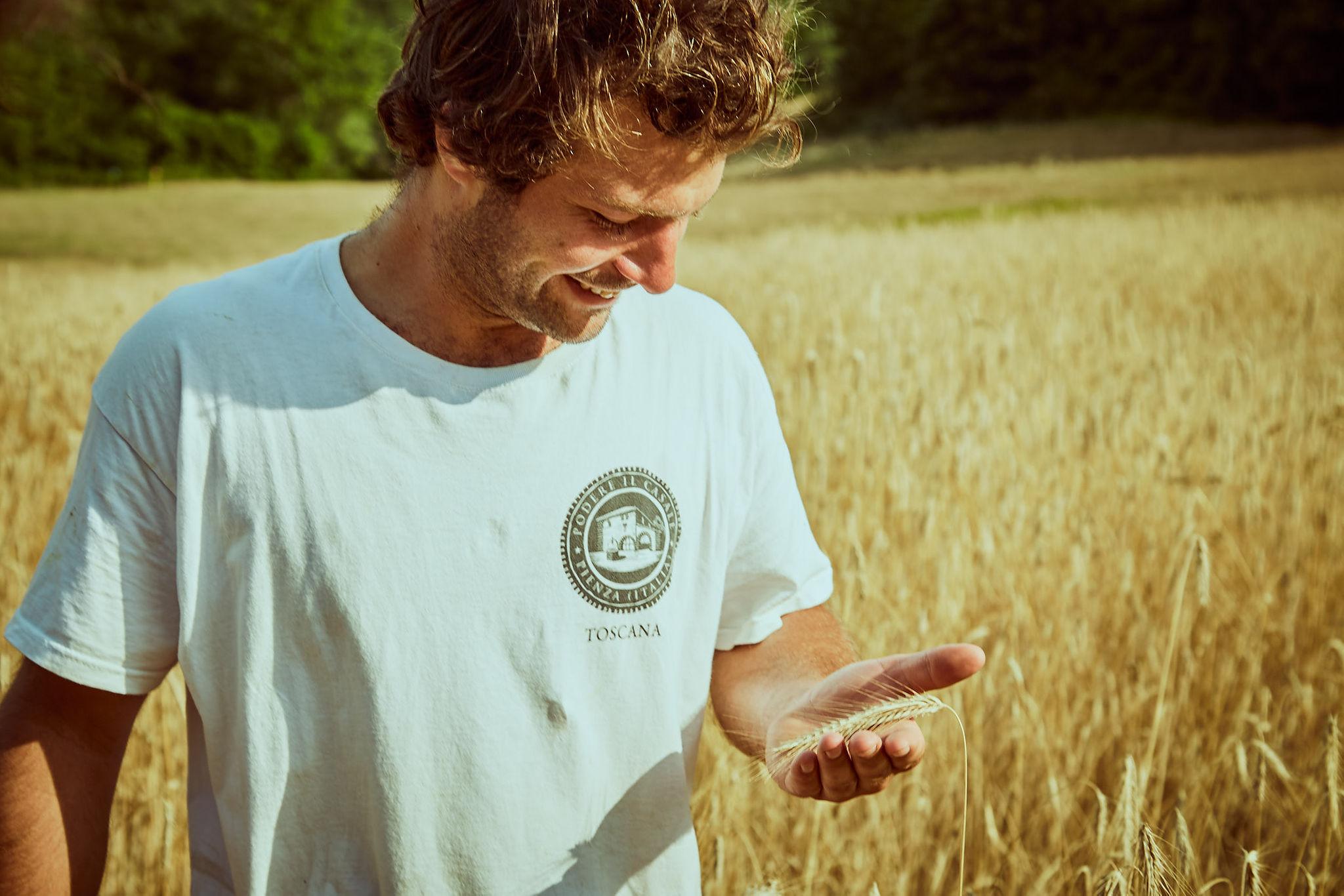 grano biologico pienza podere il casale
